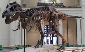 Tyrannosaurus Rex Skeleton Sue