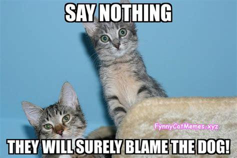 Cate Meme - funny cat memes the best funny cat memes slapwank
