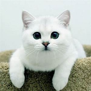 Very beautiful cats (3 photo) | Funny Cat | DomPict.com