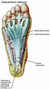 Sole Of The Foot Anatomy