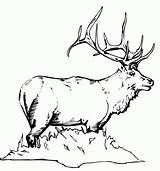 Coloring Pages Elk Hunting Deer Adult Animal Colouring Printable Patterns Horse Moose Sheets Adults Animals Dog Dogs Print Drawing Books sketch template