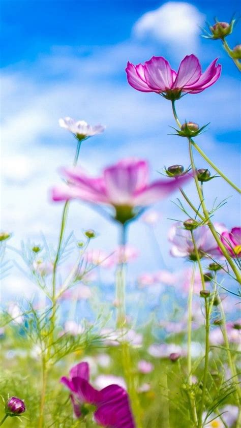 Here you can find the best bright flower wallpapers uploaded by our community. Pin by Ellen Curtis on Compelling Captures   Flower phone ...