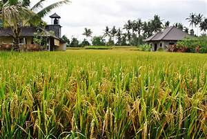 A Break in the Rice Fields: Ubud, Bali | Go Go Gadabout