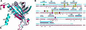 Crystal Structures Of T  Brucei Mrp1  Mrp2 Guide