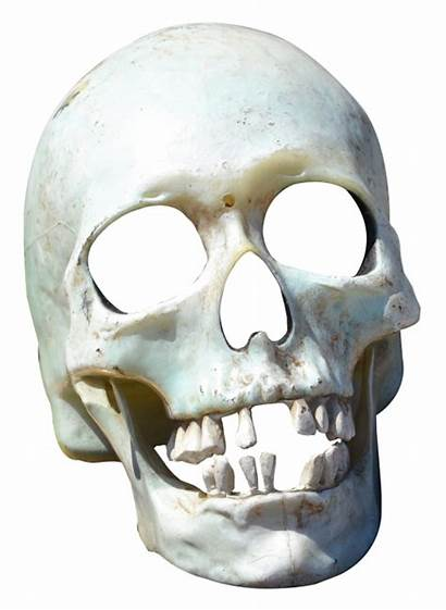 Skull Transparent Skeleton Pngpix