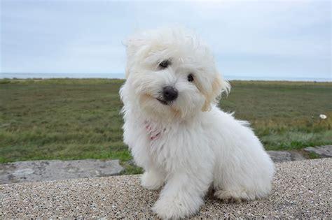 adorable small dog names  ideas  dogs