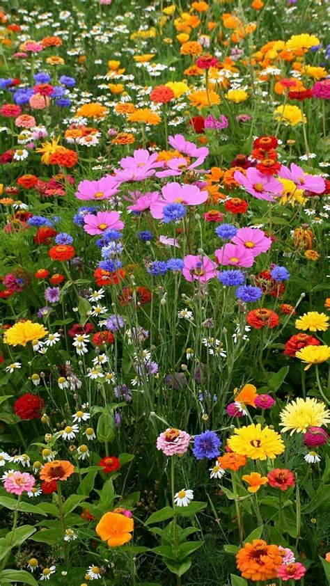 Garden Of Flowers by Mixed Flower Seed Thrown Onto Tilled Ground I Did It And