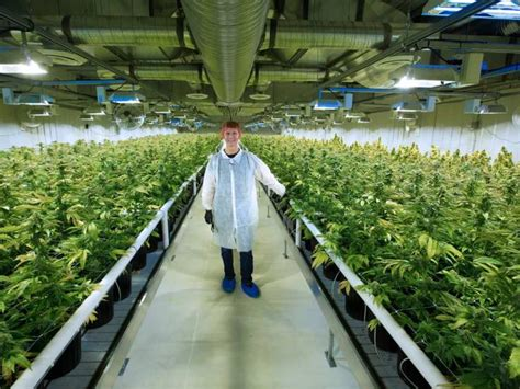 medical pot company building huge production plant