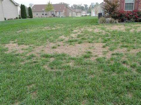 yard grubs photos lawn insects prolawnplus