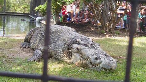 utan alligator adventure nmyrtle beach sc  youtube