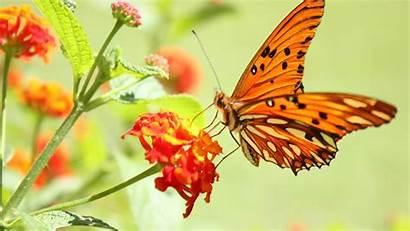 Wallpapers Butterflies Flowers Butterfly 1080p