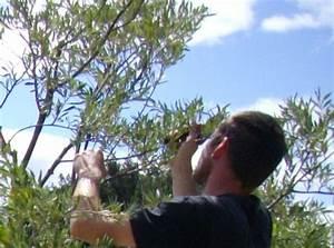 les 25 meilleures idees de la categorie arbre olivier sur With quelle plante autour d une piscine 10 les 25 meilleures idees de la categorie amenagement