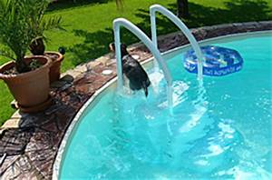 Hunde Pool Bauen : darf ein hund in den pool poolpowershop ~ Frokenaadalensverden.com Haus und Dekorationen