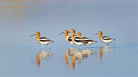 birds and water in the arid west audubon