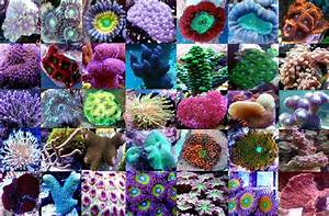 Bilder Kaufen Günstig : ablegerpaket 10 korallen g nstig kaufen korallenstube ~ Buech-reservation.com Haus und Dekorationen