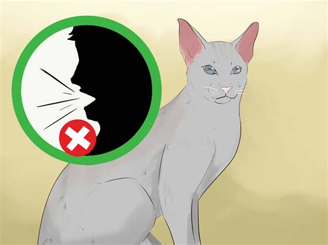 how to tell if your is blind 3 ways to tell if your cat is blind wikihow