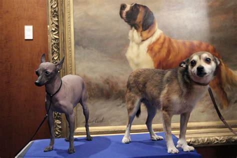 breeds debut  westminster dog show  history