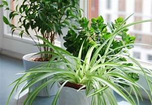Pflanzen Für Gesundes Raumklima : pflanzen im wohnbereich welche gr npflanzen sind geeignet artikelmagazin ~ Indierocktalk.com Haus und Dekorationen