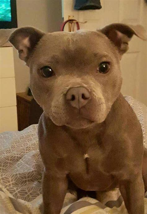 25 Best Too Cute Puppies Ideas On Pinterest