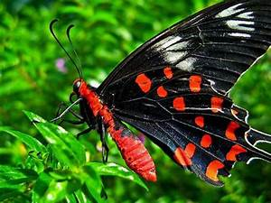 rare butterflies of the world | The World's Top 10 Most ...