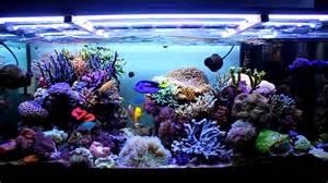Openworld ? i must have dell acquario in vendita sul web