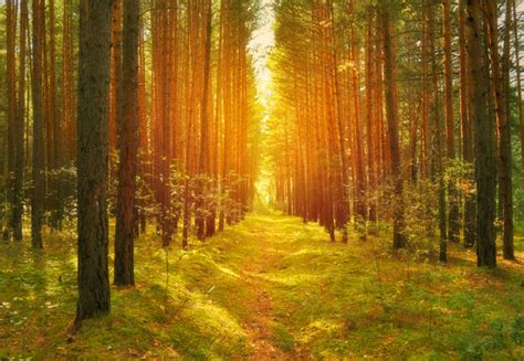 light on the path path in the woods free stock photo public domain pictures