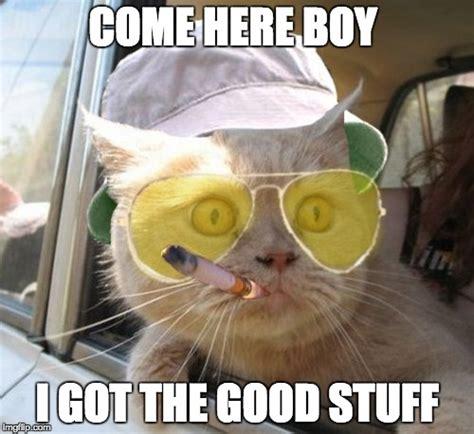 Meme Stuff - fear and loathing cat meme imgflip