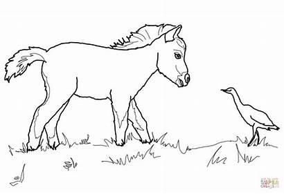 Horse Coloring Foal Quarter Pages Horses Miniature