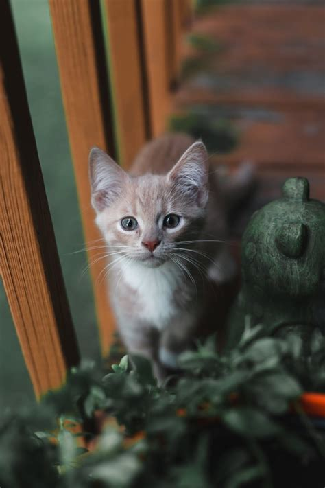 10 Cute Cat Images And Photography