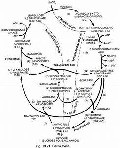 14 Best Cellular Respiration Images On Pinterest