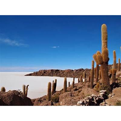 Cactus-Isla Del Pescado-Salar De Uyuni-BoliviaCacus on