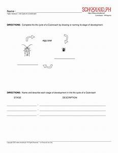 Life Cycle Of A Cockroach Worksheet For 2nd