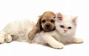 Cute Cat And Dog Images Hd Cat Cute Cats And Dogs ...