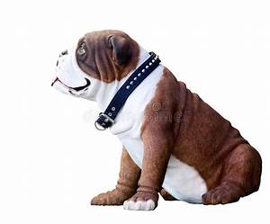 White and Brown Bulldog stock image. Image of puppy, doll ...