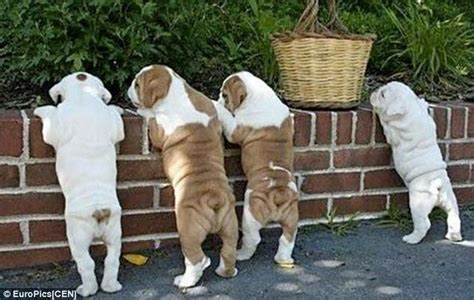 photographs  dogs adorable backsides