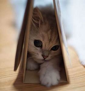 20+ Photos Of The Cutest Kittens Ever | Purrtacular - Part 4