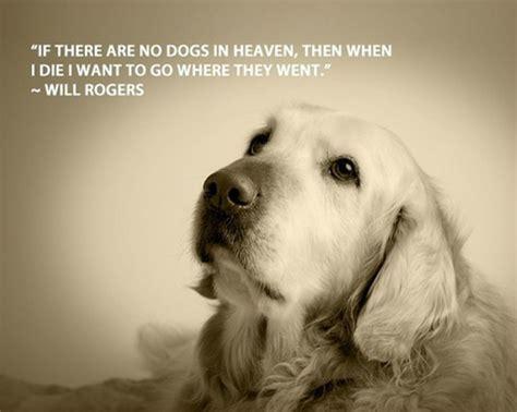 funny dog quotes spartadog blog