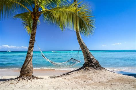 photography landscape nature tropical beach palm trees