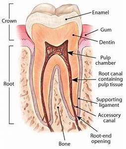 Root Canal Treatment | Dear Doctor - Dentistry & Oral Health