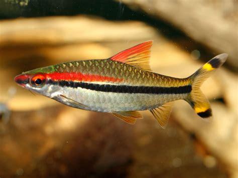 names  aquarium fishes  aquarium ideas