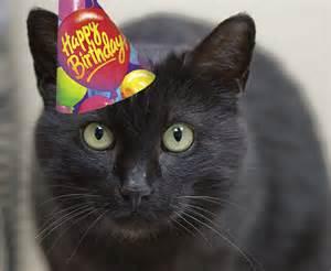 happy birthday with cats pet forums community happy birthday catcoonz