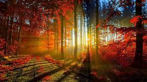 Autumn, Red, Forest, Rays, Ultra, Hd, Wallpaper, 3840x2160