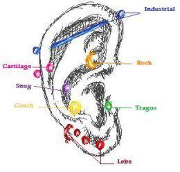 Lobe Ear Piercing Diagram by Ear Piercing Diagram Tattoos Piercings Hair And All