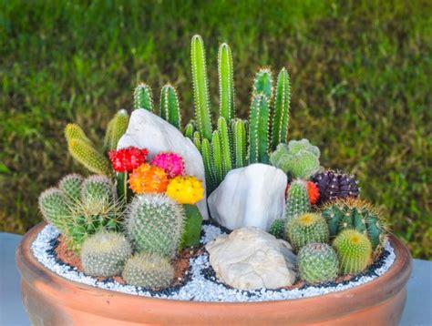 Come Curare Le In Vaso by Piante Grasse Come Curarle In Modo Facile E Naturale