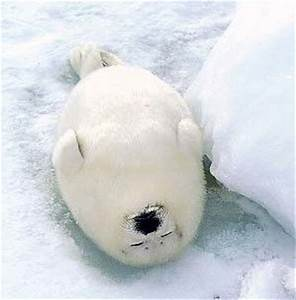 Sleepy Baby Seal - A ... cute. | Winter | Pinterest | Sun ...