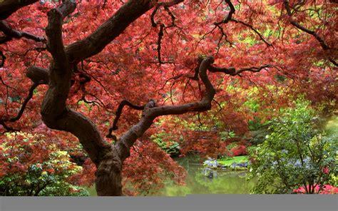 como es otono en japon taringa