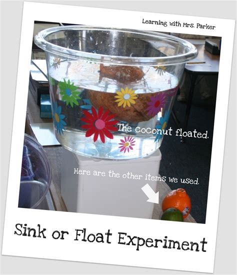 sink or float experiment 1000 images about science float sink experiments on
