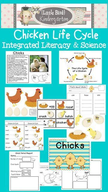 cycle of a chicken highly engaging informative and