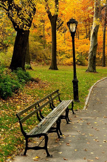 New York City Central Park Fall Bench