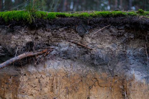 vertikutieren wann am besten rasen vertikutieren l 252 ften sanden was ist wann am besten plantura